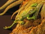 FRGFRN_Frog