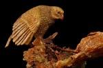 LE-Kakapo-Side-01