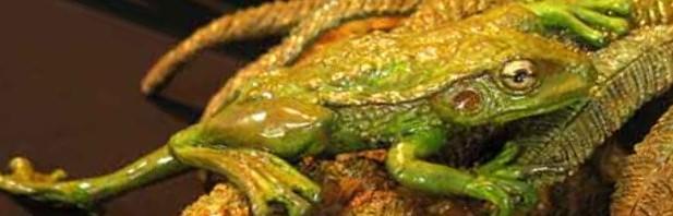 Frog on Fern