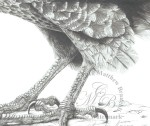 Falcon-Pencil-2-MatthewCU60